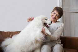 happy senior woman hugging dog  Samoyed husky sitting on sofa
