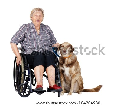 Happy senior woman in wheelchair with her big dog, great for zoo therapy, guiding dogs or other health or medical issues.