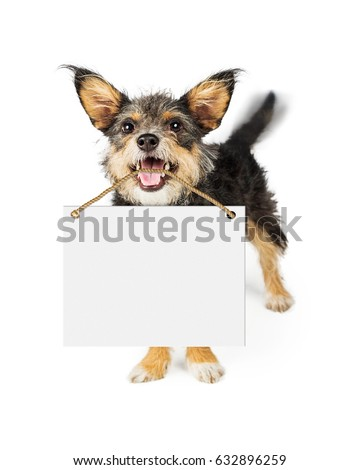 Happy small breed dog carrying blank white sign in mouth. Motion blur showing wagging tail. Сток-фото ©