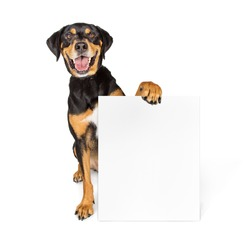 Happy smiling large dog sitting on white holding blank sign to enter your message on
