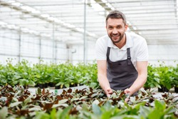 Happy smiling male gardener working in a greenhouse