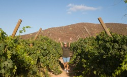 Happy smiling woman senior with gray hair. walking through bunches of grapes. looking at camera. Excursion for healthy lifestyle. One people caucasian.Green vineyard in background.