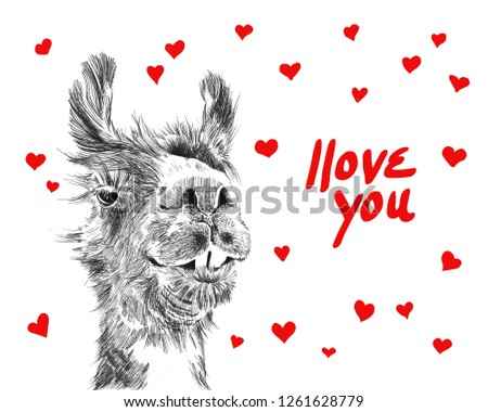 Happy valentines day illustration of cute llama surrounded by hearts saying I love you in handwritten red typography letters, fun humorous valentines day card or background sketch