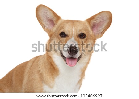 Happy Welsh corgi Pembroke close-up portrait on a white background