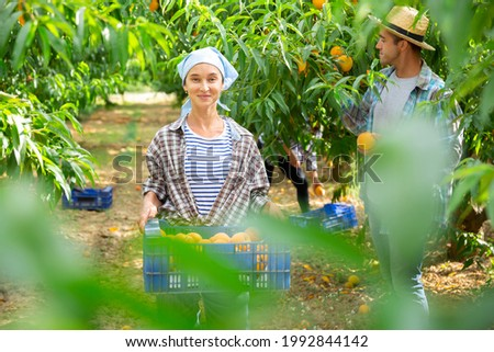 Happy woman gardening in her orchard, holding freshly harvested peaches in plastic box