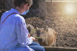 Happy woman watching and feeding wild boar in zoo. woman in protective mask visit zoo in pandemic days. piggy animals in zoo eating from hand on warm day.