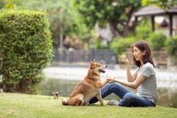 Happy women and Shiba Inu dog having fun playing in summer sunny park, giving paw high five owner.