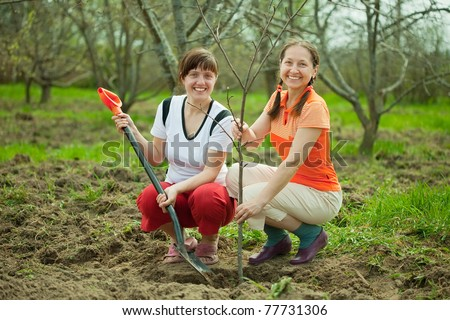 Happy women planting fruit tree at orchard  in spring - stock photo