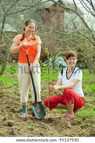 Happy women planting fruit tree outdoor - stock photo