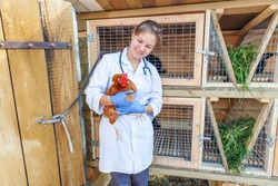 Happy young veterinarian woman with stethoscope holding and examining chicken on ranch background. Hen in vet hands for check up in natural eco farm. Animal care and ecological farming concept