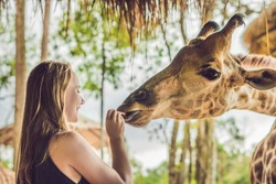 Happy young woman watching and feeding giraffe in zoo. Happy young woman having fun with animals safari park on warm summer day