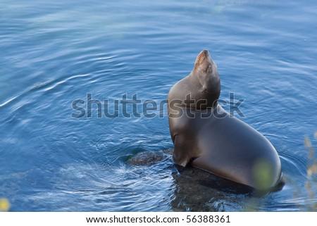 Harbor Seal basking in the sun