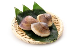 Hard clam on white background