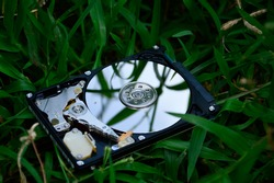 Hard disk placed on the grass And a small insect perched, meaningful pictures Information being attacked by virus