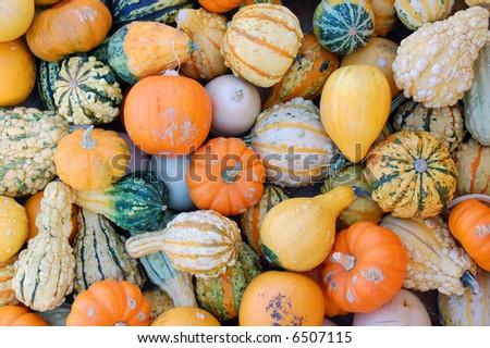 hard squash and gourd