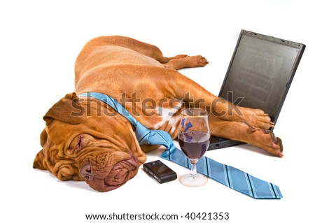 Hardworker Fell asleep at the laptop
