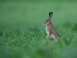 Hare,wildlife,animals,cute animals,wildlife animals,wildlife,animals,cute animals,wildlife animals