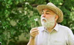 Harmony of soul. Peaceful grandpa blowing dandelion. Happy and carefree retirement. Elderly man in straw summer hat. Grandpa senior man blowing dandelion seeds in park. Mental health. Peace of mind.