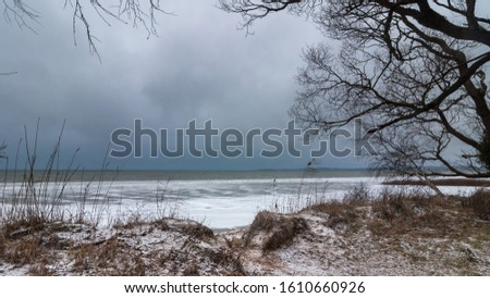 harsh sad winter landscape. frozen grassy lake shore with coastal ice and a bare branches tree against a gray-blue moody sky in wet windy weather