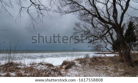 harsh sad winter landscape. frozen grassy lake shore with coastal ice and a bare tree against a gray-blue moody sky in wet windy weather