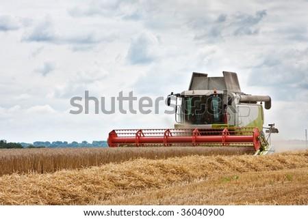 harvest #36040900