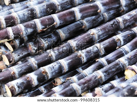 harvest black sugarcane