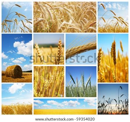 Harvest concepts - stock photo