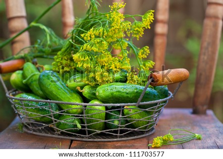 Harvest cucumbers and dill in a basket on wooden background. Also available in vertical format.