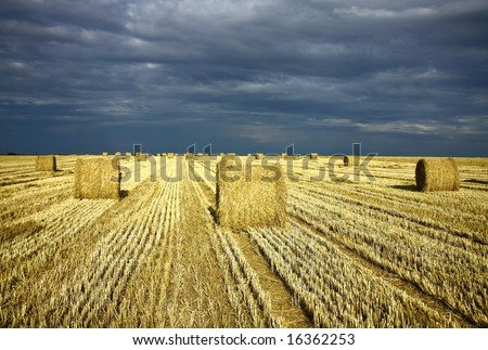 harvest field with dramatic sky and straw rolls