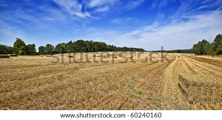 Harvest landscape view - stock photo