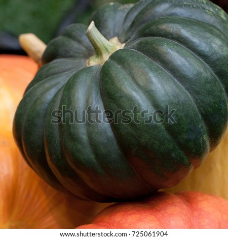 harvest of beautiful pumpkins of different varieties and colors #725061904