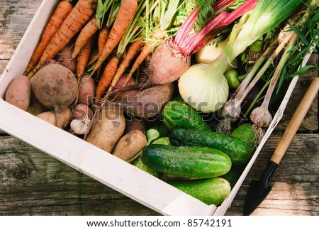 Harvest of fresh vegetables in a white box in the garden