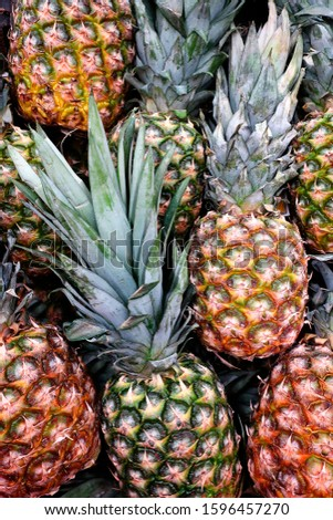harvest of ripe pineapple fruits collected and piled in a pile