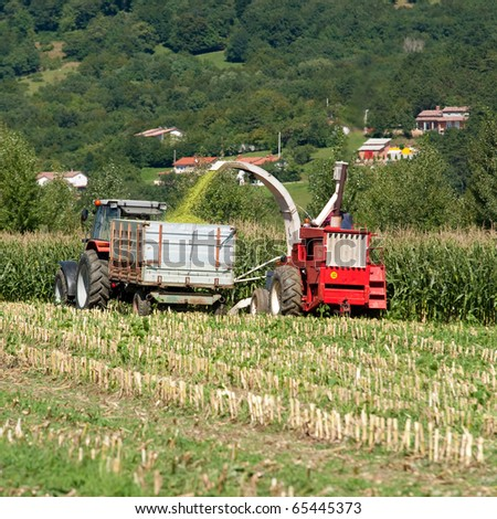 Harvest on a corn field on a sunny day in early autumn with agricultural machinery - tractor and combine