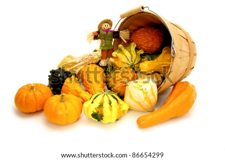 Harvest pail of spilling autumn gourds and pumpkins with scarecrow over white