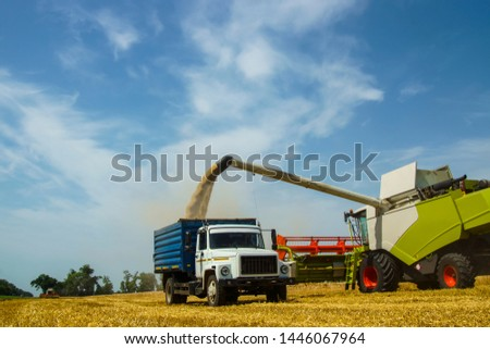harvest time - combine loads the harvested grain into the bunker of the car                                #1446067964