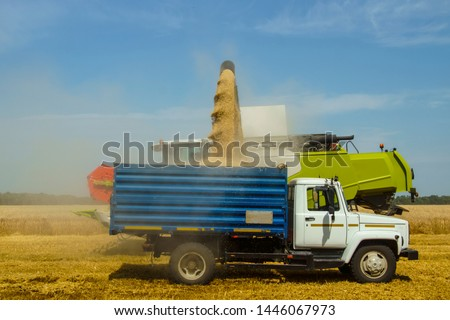harvest time - combine loads the harvested grain into the bunker of the car                                #1446067973