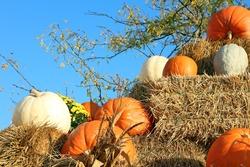 harvest time decoration in Fall (Autumn) season