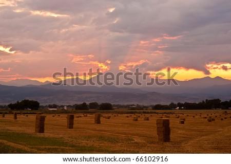 Harvest Time In Colorado