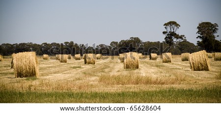 Harvest time nearly finished, hay bales sit in the fields waiting to be picked up