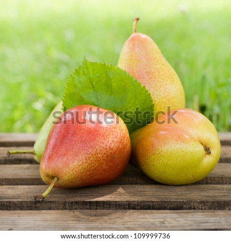 Harvest time, pears