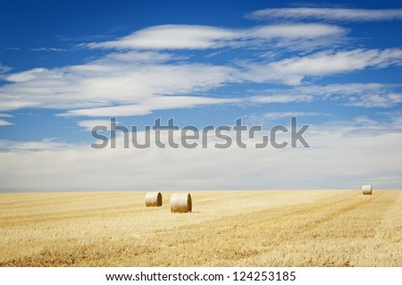 Harvest time with hay bales in the summer sun