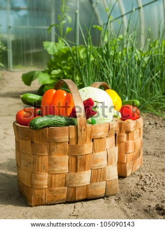 Harvest vegetables in baskets on the ground