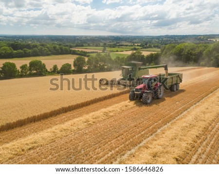 Harvest view of combine harvester cutting summer oats field crop and tractor trailer on farm