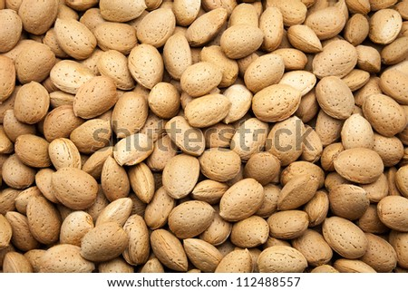 harvested almonds of the almond trees