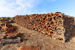 Harvested cork oak bark from the trunk of cork oak tree (Quercus suber) for industrial production of wine cork stopper in the Alentejo region, Portugal