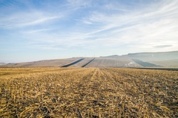 Harvested corn field with remains from the plants on some farmland with hills and a blue sky on a cold autumn winter day