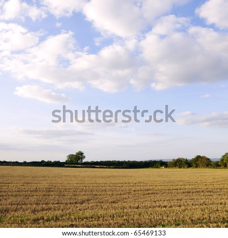 Harvested Farmland with Beautiful Sky Above - stock photo