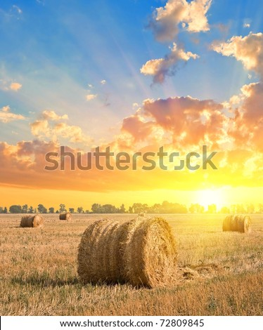 harvested field by a sunset