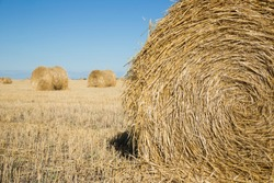 Harvested field with dry yellow grass. Rolls of hay close-up. One role is closer and others in the background. Picturesque landscape with pressed straw